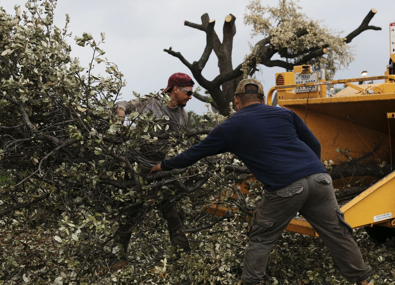 Two men work to remove the oak trees that line Forest Lane on Friday June 2, 2017. (Tailyr Irvine/The Dallas Morning News)