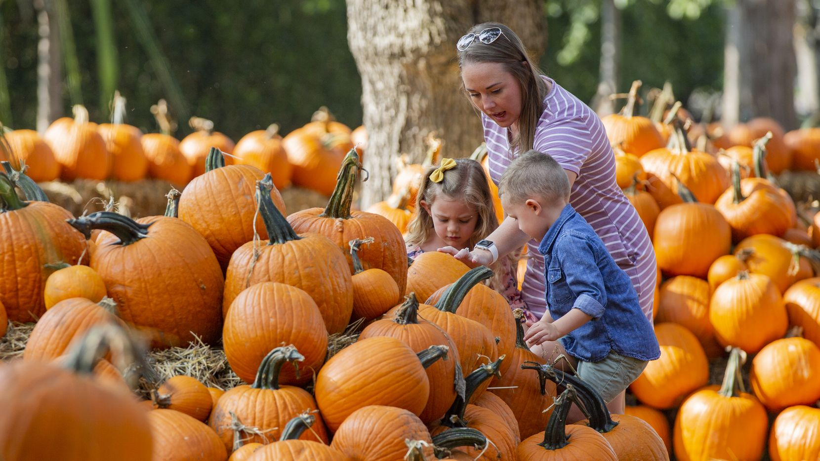 Heather Torregrossa from Frisco and her children, Emerson, 5, and Lennon, 3, look at pumpkins in the Dallas Arboretum's Pumpkin Village on Sept. 18, 2020 in Dallas. Peerless Production Group's Frights'n Lights Frisco will feature thousands of hand-carved jack-o-lanterns at Riders Field in Frisco this fall.