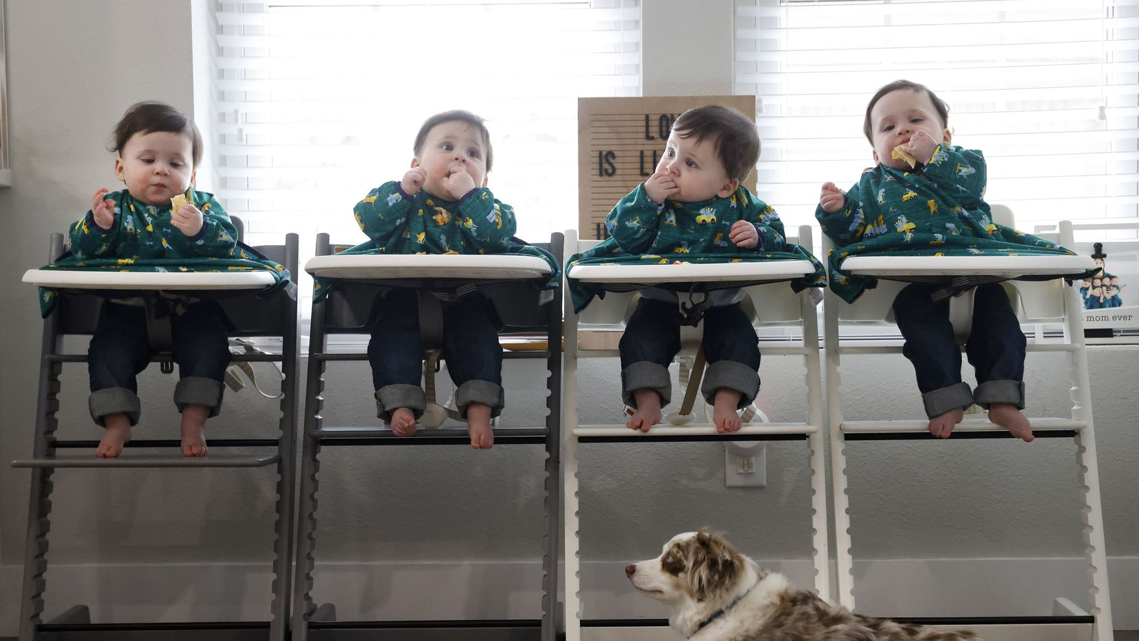 Harrison, Hardy, Henry and Hudson eat lunch as Zeke waits for food to fall at their house on Tuesday, February 9, 2021 in Grapevine, Texas. (Vernon Bryant/The Dallas Morning News)