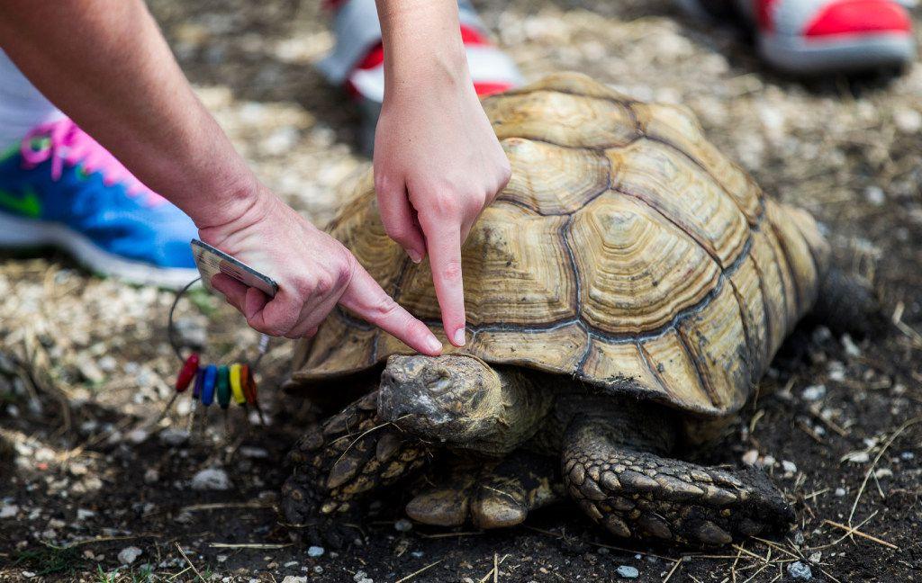 Jamie Wheeler-Matlock and her daughter Austen Wheeler pet a tortoise at the Gentle Zoo.