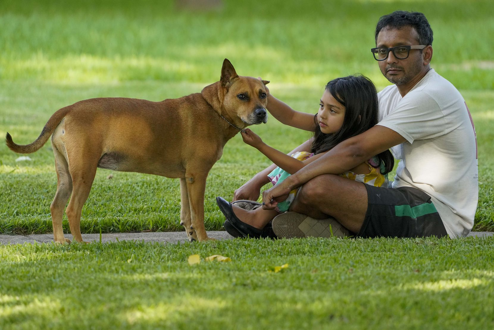 Shomik Pathak sits with his daughter Mira, 5, and their dog Bindi as they listen to Cameron Havens sing from the back of a pickup truck during a 'Drive By Concert' through the Canyon Creek subdivision on Thursday, July 2, 2020, in Richardson.