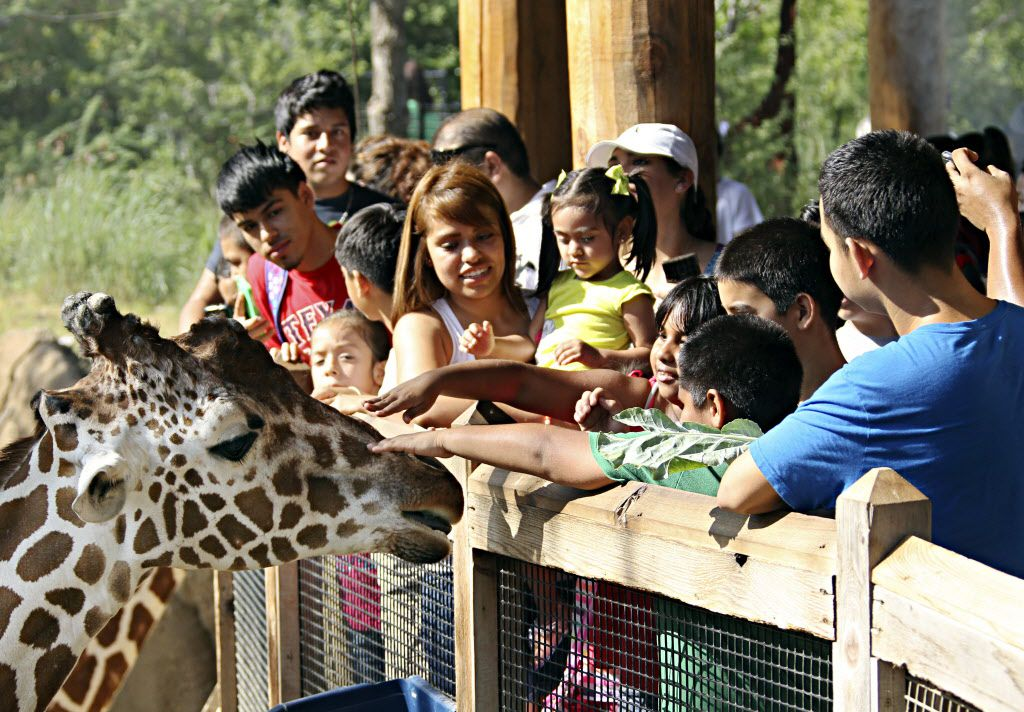 Visit the Dallas Zoo during its Penguin Days promo, Jan. 6-Feb. 29, and get in for just $8 (free for little ones younger than 2).