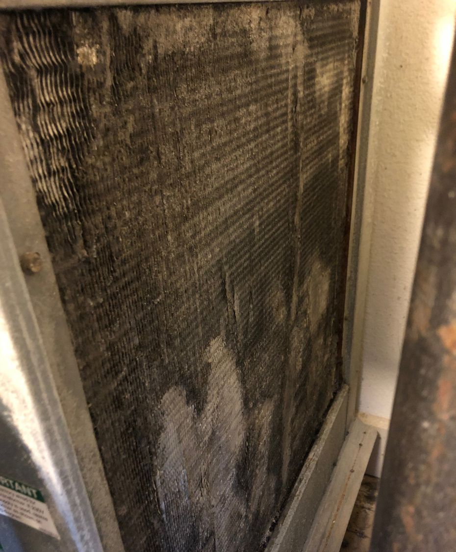 Mold Inspection Sciences Texas Inc. found mold in the air-conditioning unit of Laura Levine's apartment at South Side on Lamar.
