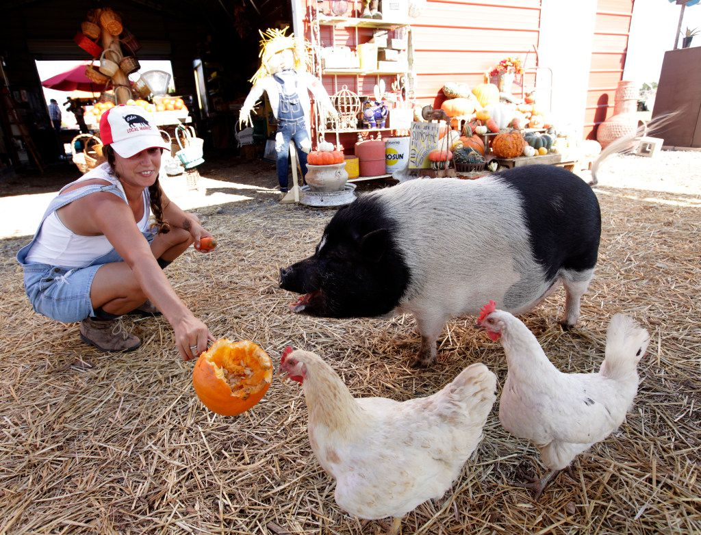 Mona Fleming, left, feeds a pumpkin to Lola the pig and some chickens at Lola's Local Market in Melissa.