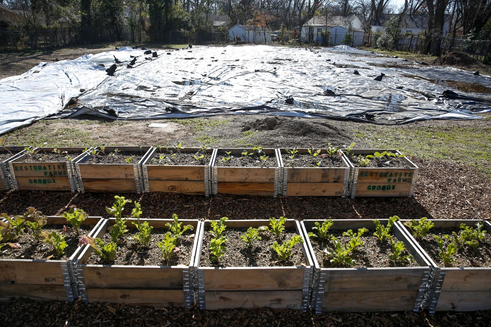 Boxes with mustard and collard green seedlings sit next to a tarp where  a greenhouse and garden will be built at Hatcher Station Farm in South Dallas.