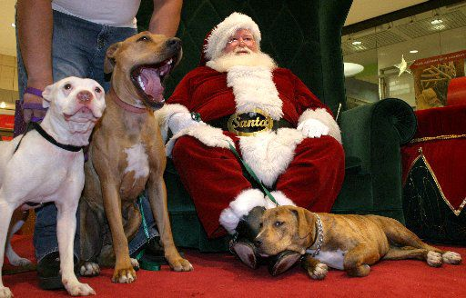 Miguel Alvarenga positioned his dogs (from left) Mija and Armani as his other dog, Mamas, rested on Santa's boots during a photo shoot at Town East Mall in Mesquite. (2005 File Photo/Jason Janik)