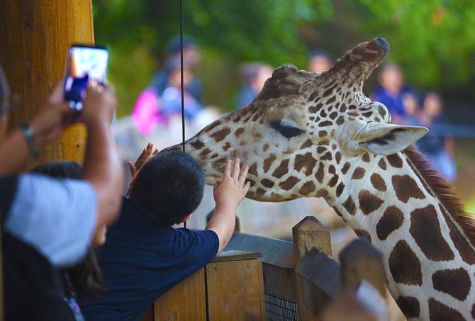 Durante el mes de julio, los visitantes de Galleria podrán aprender más sobre los animales del Zoológico de Dallas.